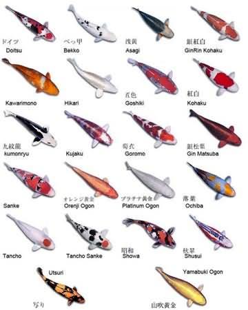 Tatuajes de oriente 200 Diseos Japoneses