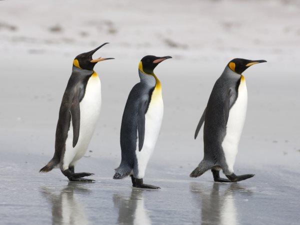 Simbología de los pingüinos