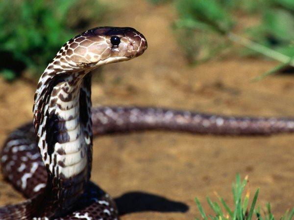 Simbología de la serpiente