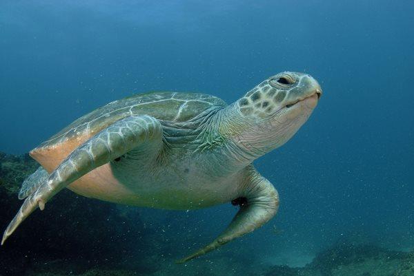 Simbología de la tortuga