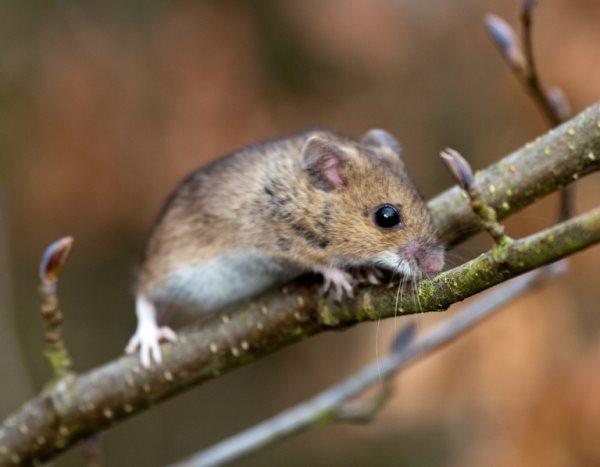 Simbología del ratón