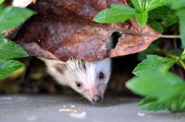 algunos de los elementos que se relacionan con los ratones son modestia temeridad inocencia fertilidad conciencia