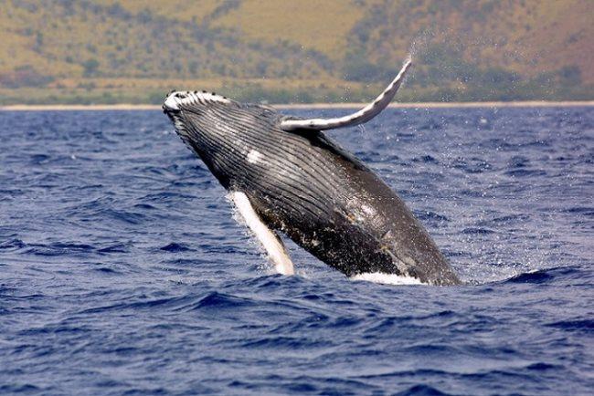 Simbología de la ballena