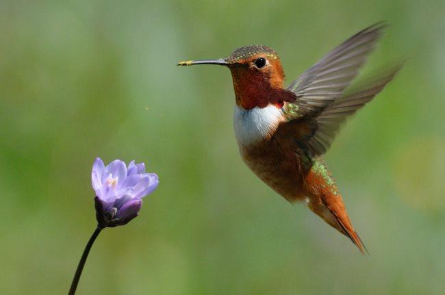 Simbología de los colibríes