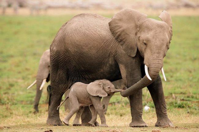 Simbología de los elefantes